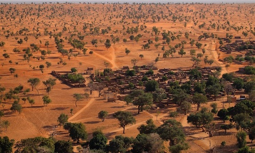 Trees in the Sahara desert.